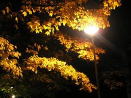 fall night 4 by blueeyedfreak