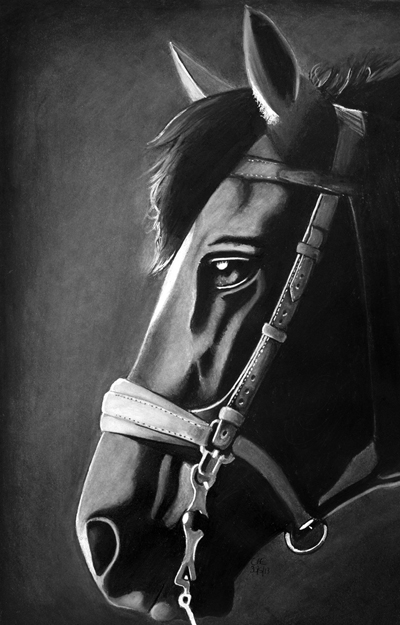 War Horse by cconnell