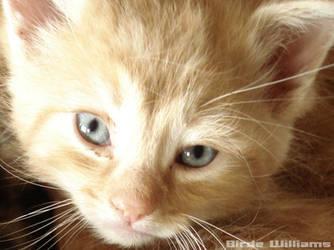 a kitten's gaze