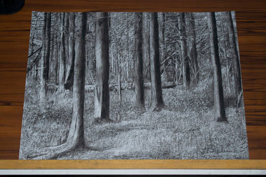 Woods[Charcoal on Paper]