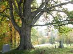 Large Tree Stock