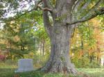Large Tree Stock 2