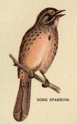 Vintage Sparrow by HauntingVisionsStock