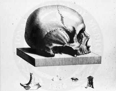 Vintage Skull by HauntingVisionsStock