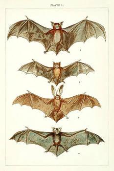 Vintage Bats