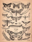 Butterfly and Moth Clipart