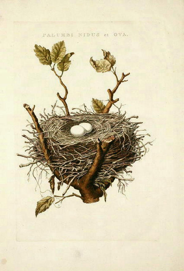 Vintage Birds Drawing Nest Stock Images, Royalty-Free