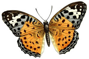 Pretty Butterfly Clipart by HauntingVisionsStock
