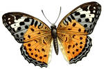 Pretty Butterfly Clipart
