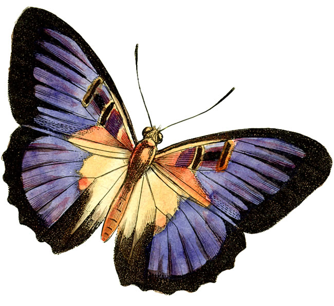 free printable butterfly clip art - photo #22