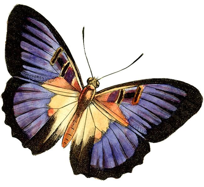 Butterflies Free Clipart