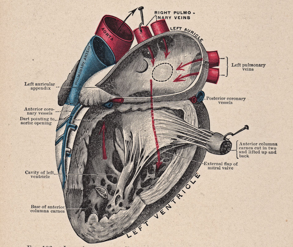 Vintage heart diagram by hauntingvisionsstock on deviantart vintage heart diagram by hauntingvisionsstock ccuart Image collections