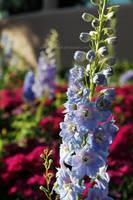 bloom, flower. by AlexandraBuck