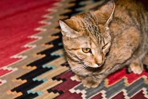 waffles, the kitty. by AlexandraBuck