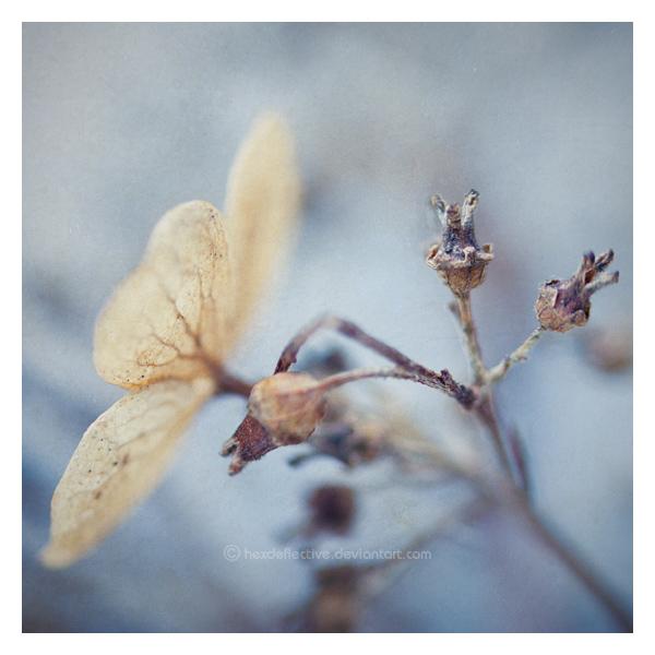 The Quietness Of Winter by hexdeflective