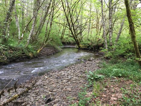 Spring Creekside 1