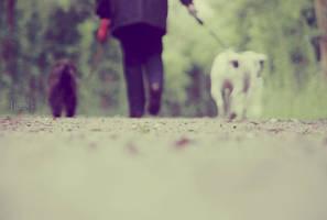 Dog walking by BeciAnne