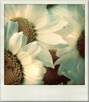 P is for Polaroid -I- by Nour-K