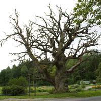 Stock Dead Tree by minifoot