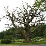 Stock Dead Tree