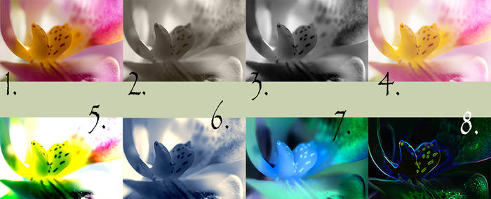 Editing Orchids