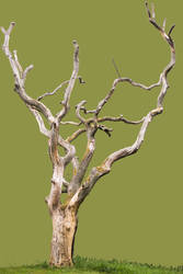 Stock Old Tree