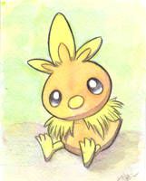 Torchic by The-EverLasting-Ash