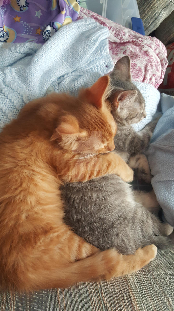 kittens that cuddle by sanubisgirl