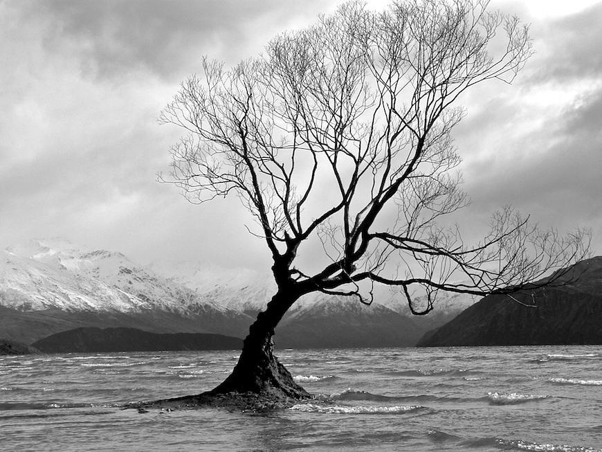 Tree on Lake Wanaka B+W