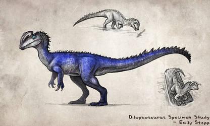 Dilophosaurus Specimen Study by EmilyStepp