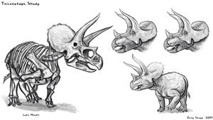 Triceratops Sketch Study
