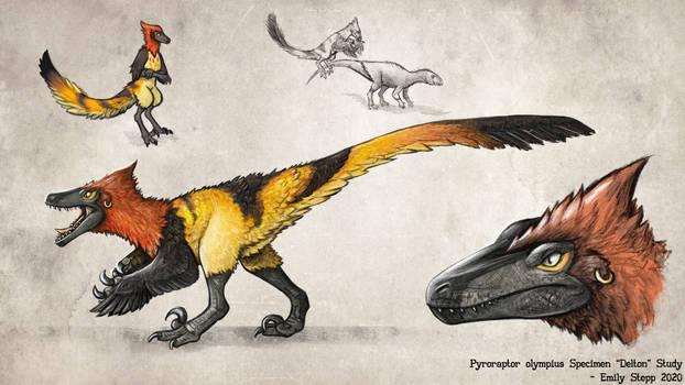 Pyroraptor Specimen Study