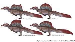 Spinosaurus Sail and Tail Shape Study