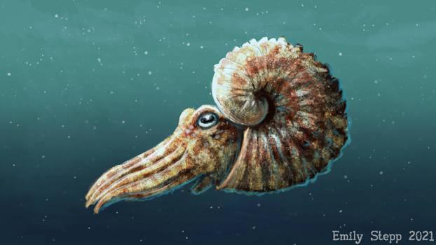 Ammonite Week Speed Paint