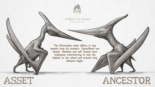 Asset vs. Ancestor: Pteranodon