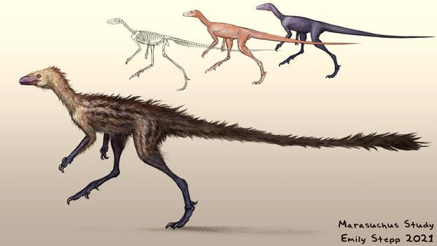 Marasuchus Study