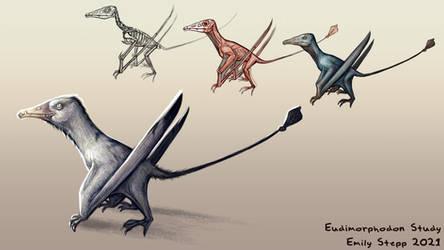 Eudimorphodon Study