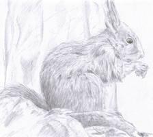 Red Squirrel by Feagaer