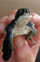 Baby turtle by Punkybrewster80