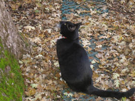 Kitties: Akaya 1 by rhythmic-high