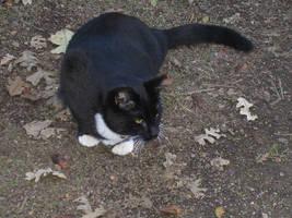 Kitties: Akaya 3 by rhythmic-high