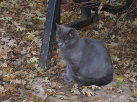 Kitties: Yuupon 1 by rhythmic-high