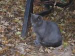 Kitties: Yuupon 1