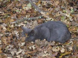 Kitties: Yuupon 2 by rhythmic-high