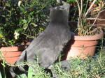 Kitties: Yuupon 3