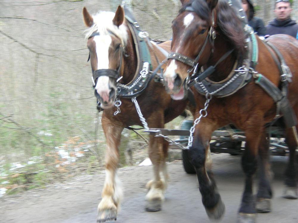 Neuschwanstein Horse Carraige