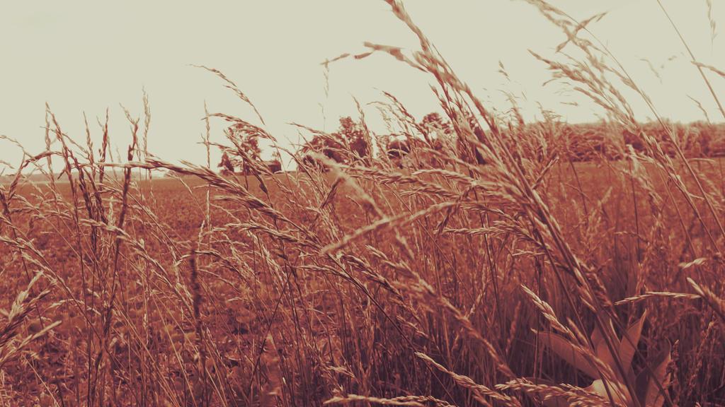 Through Crimson Fields by ignotism