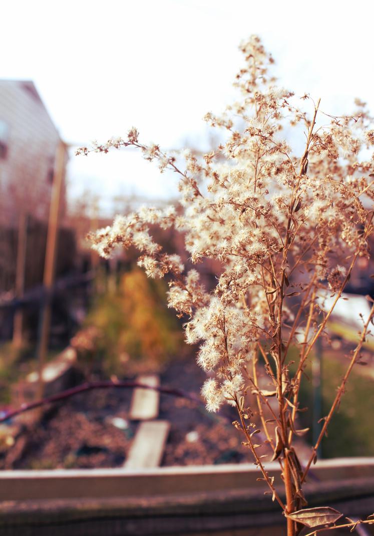november bloom by ignotism