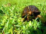 Photogenic Turtle