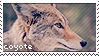 coyote stamp by VanillaCoyote